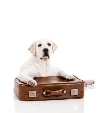 Urlaub ohne Hund - gute Unterbringung gesucht: Hundehotels, Hundepension und Co.