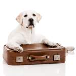 Urlaub vom Hund - Trennung auf Zeit.