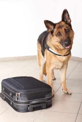 Hundepension richtig auswählen. Checkliste für einen Urlaub ohne Hund.