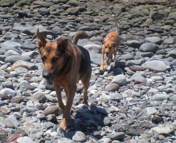 Jerry mit Kumpel im Sommer 2008. Die beiden Hunde haben ihren Spaß am Meer.